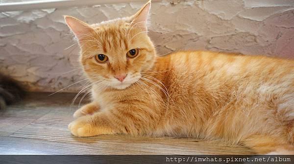 caturday cat cafeDSC04265.JPG