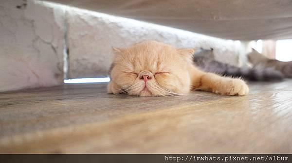 caturday cat cafeDSC04268.JPG
