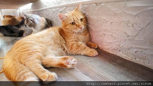 caturday cat cafeDSC04270.JPG