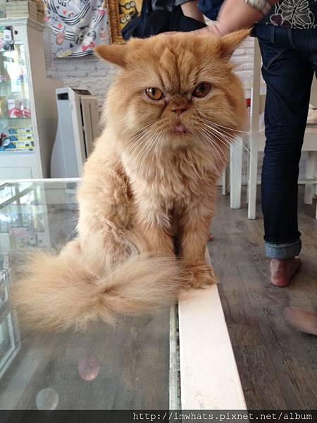 caturday cat cafeIMG_5389.JPG