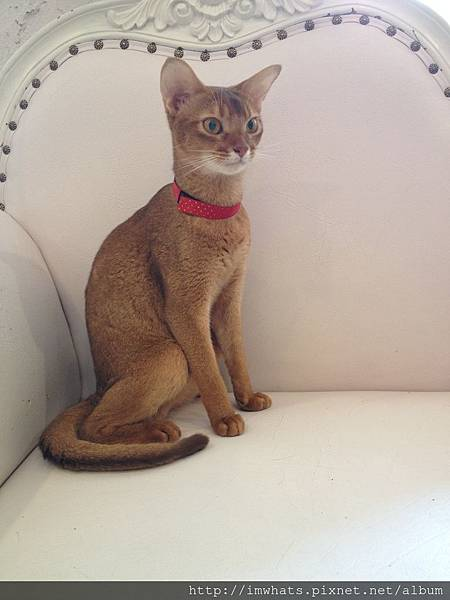 caturday cat cafeIMG_5390.JPG