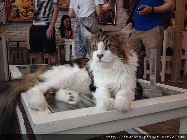 caturday cat cafeIMG_5391.JPG