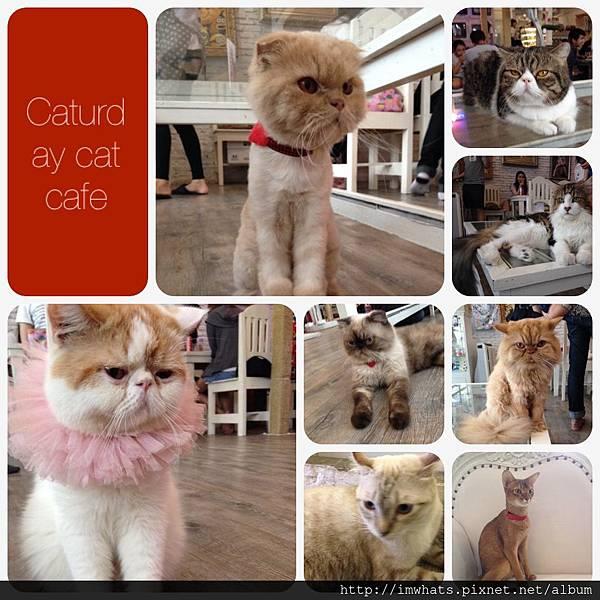 caturday cat cafeIMG_5415.JPG