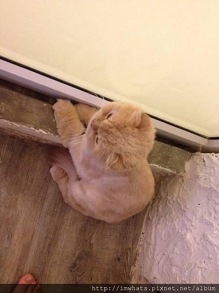 caturday cat cafeIMG_5424.JPG