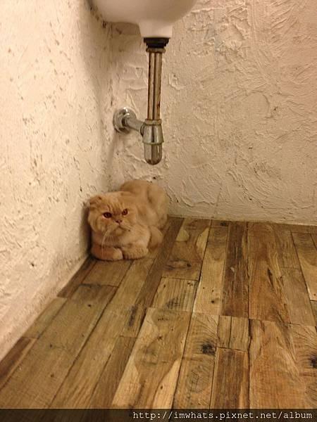 caturday cat cafeIMG_5426.JPG