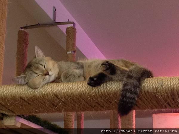 caturday cat cafeIMG_5438.JPG
