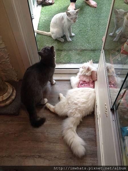 caturday cat cafeIMG_5439.JPG