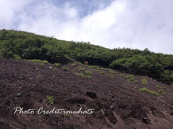 富士山IMG_6370.JPG