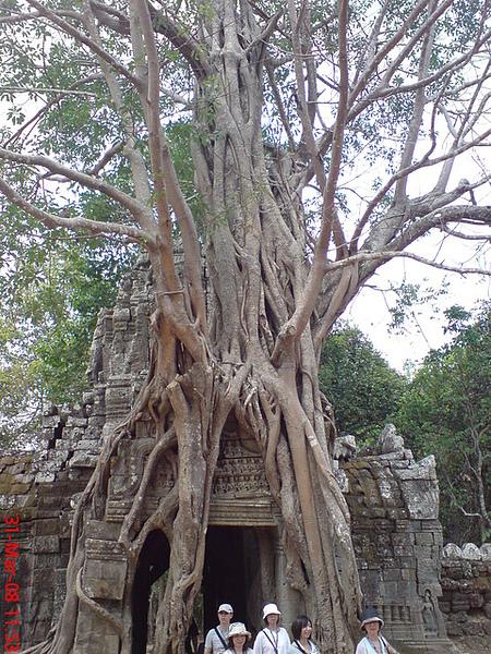 被樹緊緊纏繞的建築