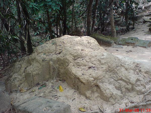 路旁隆起的土丘其實是白蟻窩