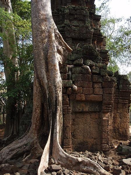 緊緊纏繞在一起的建物與樹