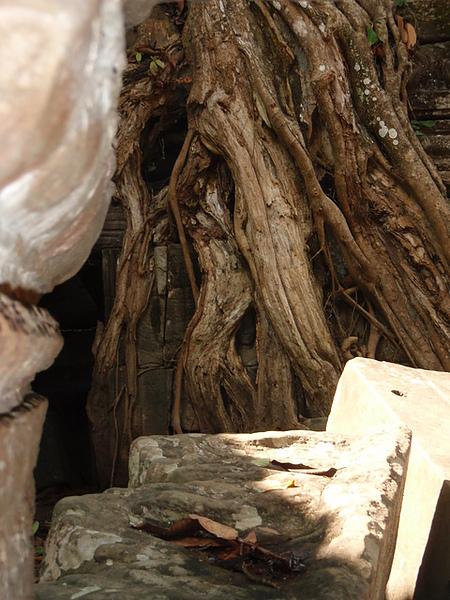 躲在樹根間偷看過往遊人的阿普莎拉