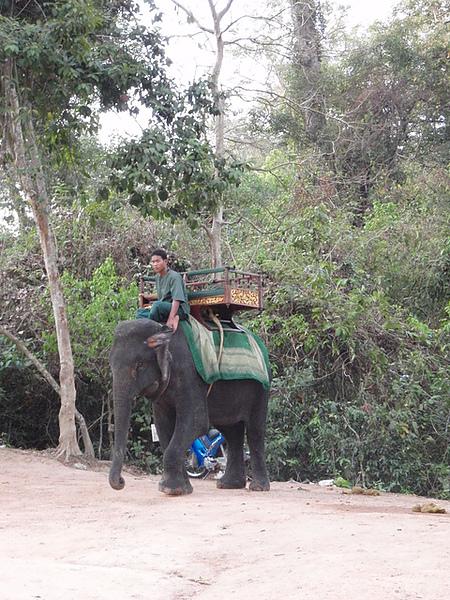 可以騎大象上巴肯山
