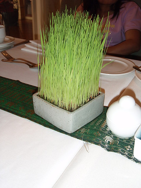 我不是小麥草我不能吃