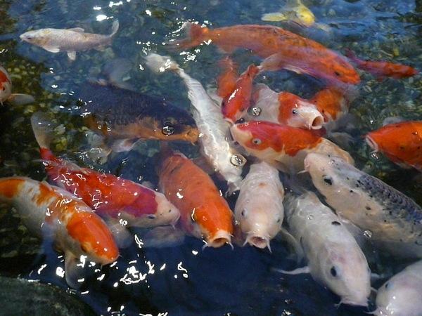 魚兒魚兒水中游~~