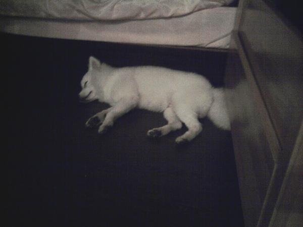 9. 悶到任命的在自己的地盤(地板上) 睡著.jpg