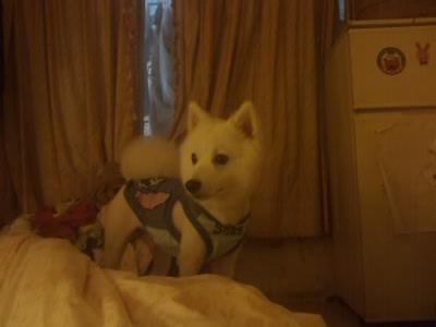 小狐狸在床上