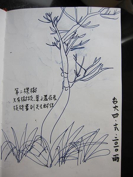 台大第2棵樹
