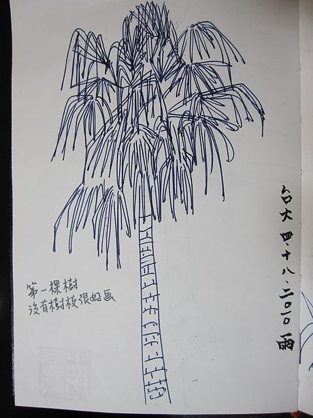 台大第1棵樹