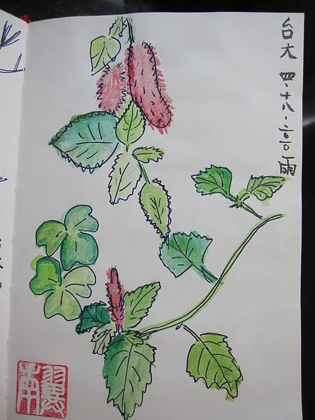 台大小草花