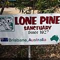 澳洲最大無尾熊保育區-龍柏