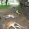 澳洲的動物都好逗趣阿