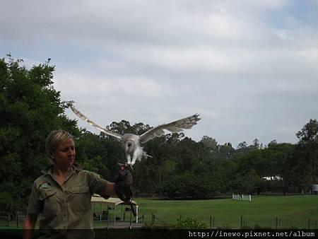 還有飛鷹表演超威的