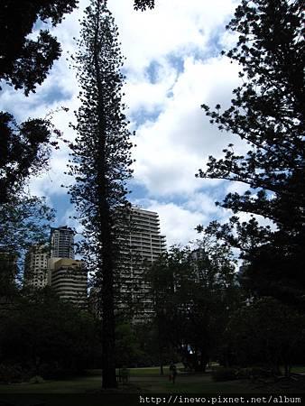 布里斯本植物園