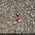 鳥鳥給我的國旗,自己走丟兩次 我還以為就掰掰了