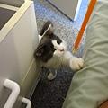新家有小貓 好黏人