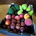 最後一批水果