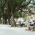 榮星公園_09