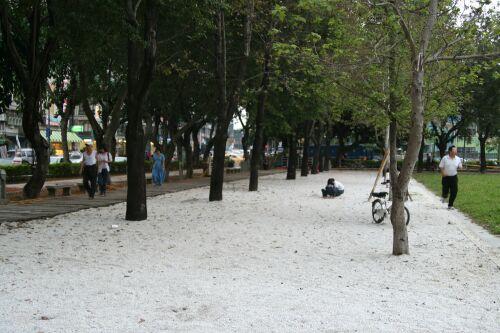 榮星公園_12