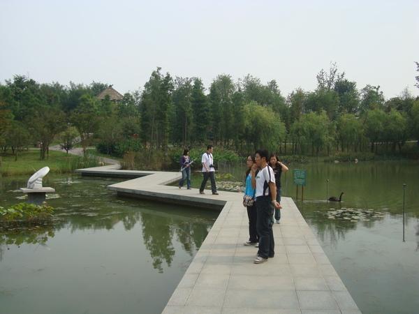 鏡湖黑天鵝.jpg