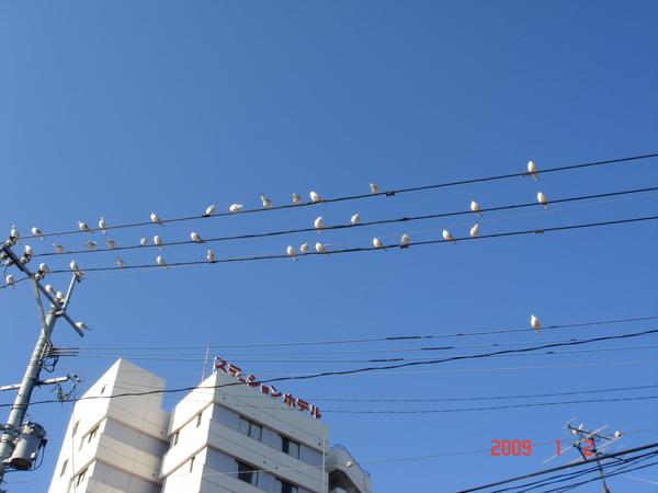 地上一堆鳥大便.JPG