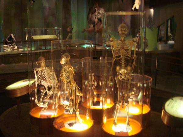 人類演化史