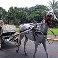 聖地牙哥古堡外有很多這種的馬車在載客