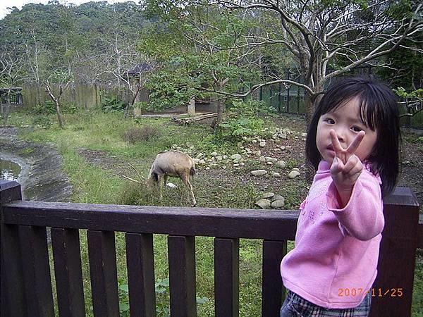 妃妃與鹿...鹿不肯轉頭看鏡頭