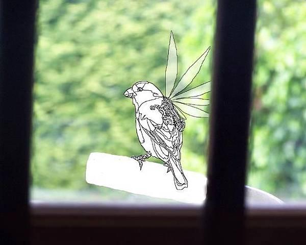 我窗口的鳥