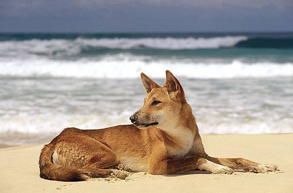 2-4a 3487×2293 ©Tourism Australia.jpg