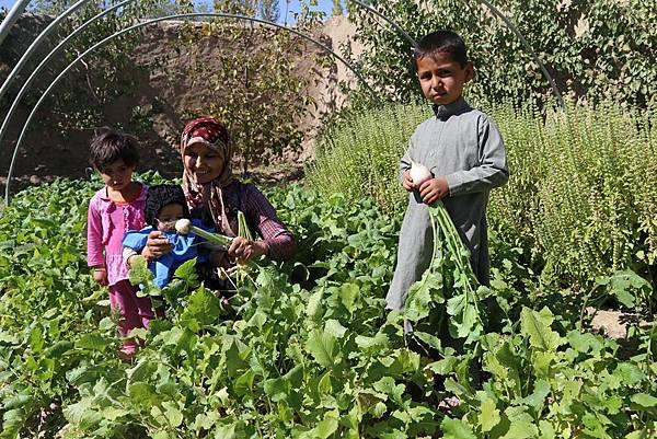 透過家庭菜園等生計發展方案,世界展望會確保當地人能學習技術、加強糧食保障。(台灣世界展望會提供)