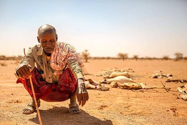東非牧人的傷痛,畜牧發達地一個月內失去近萬頭牲畜(台灣世界展望會提供).jpg
