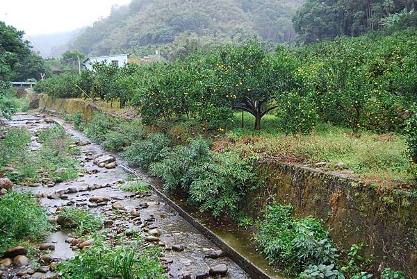 香菇農場 (16)
