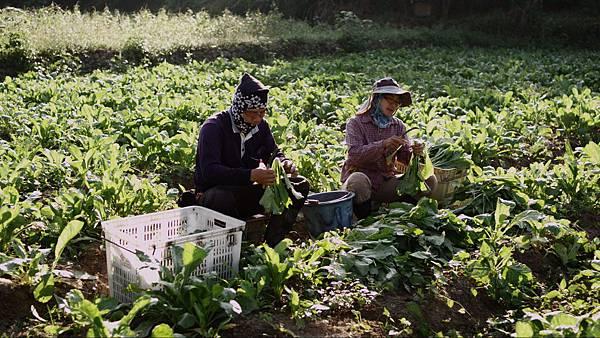 公視_台灣食堂_客家三寶的故事_種植有機蘿菠的摩登農婦夫婦