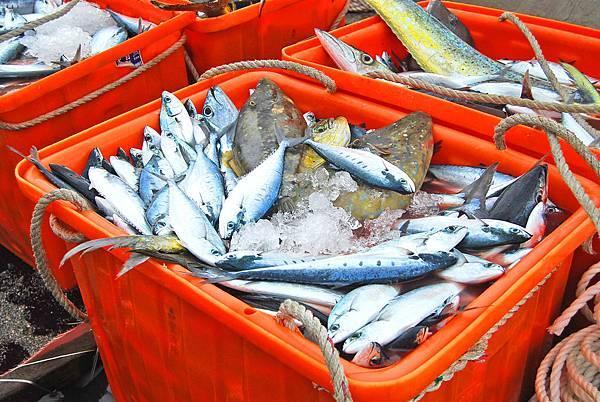 fishbar (10)