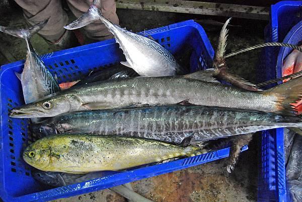 fishbar (15)