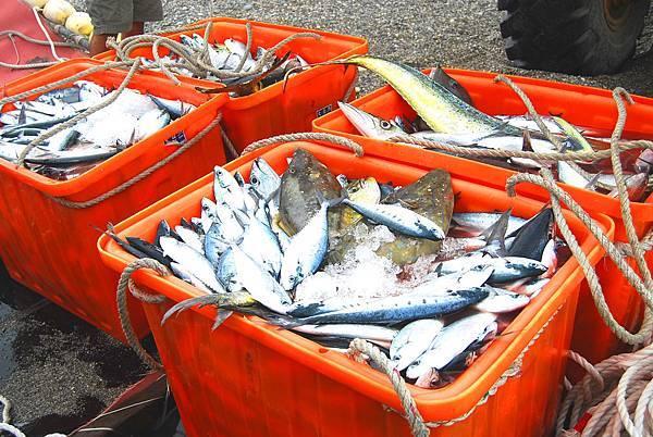 fishbar (11)