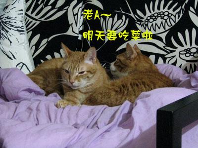 cat_life1.jpg