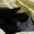 兩人甜蜜入睡