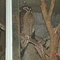 DSC01900.jpg天珠寺磁場藝品批發古董零售木雕佛像訂製整修佛具用品部0982708118